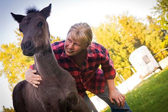 Kerstin Andersson har i över 40 år fött upp hästar hemma på gården i Förnebo, Järvsö.