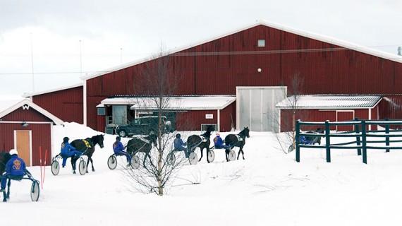Tillbaka till stallen efter några snabba varv runt skolans egen travbana.