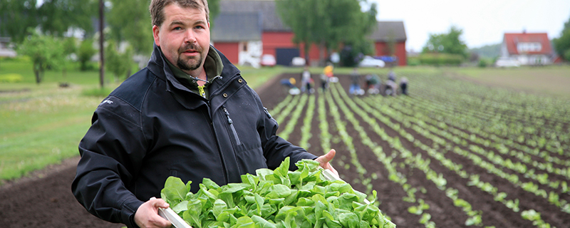 – Tobaken är tacksam att odla eftersom det saknas skadeinsekter, säger Anders Olsson.