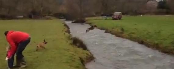 Hund hoppar över en å