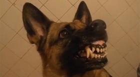 Hund med humörsvängningar
