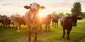 Jordbruksverket föreslår köttskatt