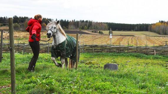 Louise Sieka  driver en träningsanläggning med bas på Toftinge gård, utanför Norrtälje.