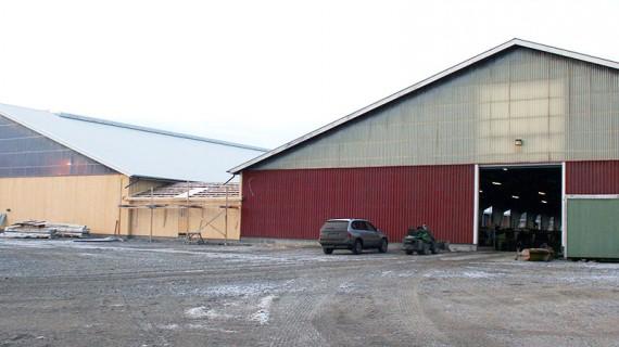 Mitt emellan det nya och gamla stallet har det byggts en sluss som leder korna in till den gamla delen och via ytterligare en sluss in till mjölkningsavdelningen.