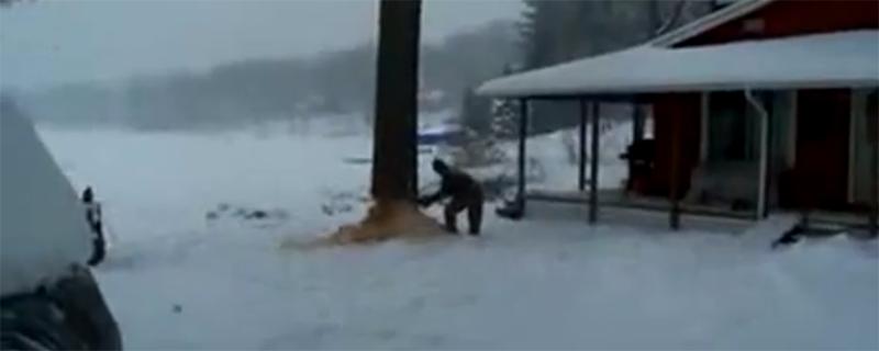 Fäll trädet åt rätt håll