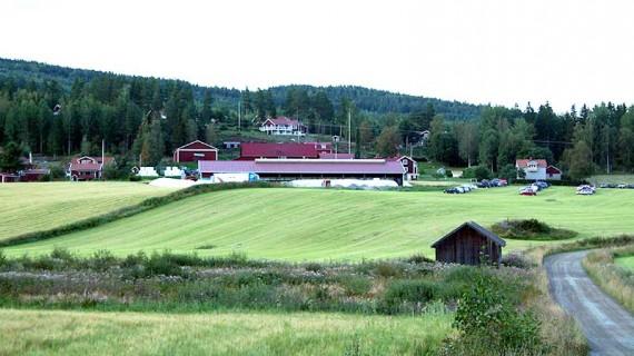 """Framför det nya ugnötsstallet i Myra i Järvsö ligger """"korvarna"""" med ensilage."""
