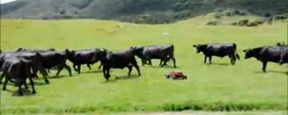 Radiobil jagar kossor
