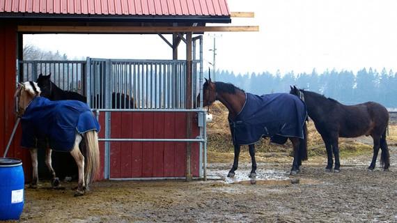 Matkön blir ibland lite längre, men alla hästar väntar snällt på sin tur.