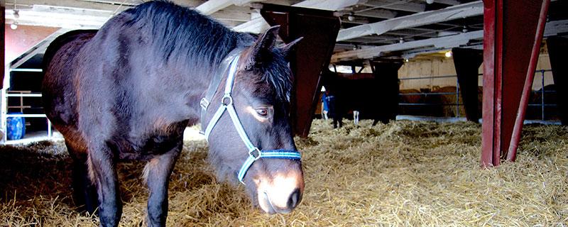 Active stable ger friskare hästar
