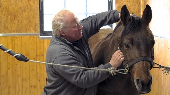 De kiropraktiska momenten är i grunden väldigt lika de som utförs på människor, men hästar har 500-600 kilo muskler istället.