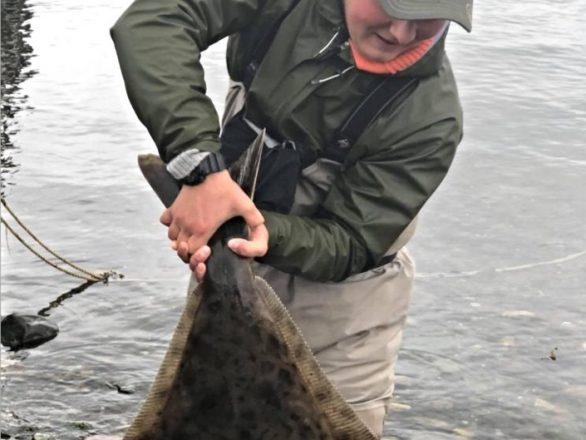 Flugfiskade kustöring – fick hälleflundra