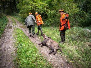 Efterlyser hårdare jakttryck mot afrikansk svinpest