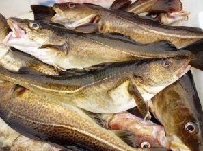 Så funkar fiskekvoterna – podd reder ut begreppen