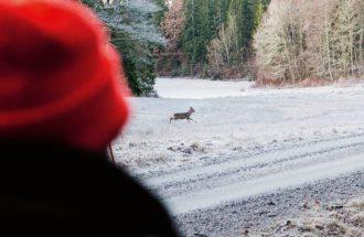 Busjakt på rådjur – med glögg och saffransbulle