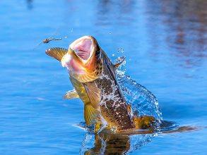 Flugfiskarens kodak moment