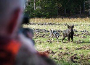 Regeringen: Hundträning i vilthägn kan förbjudas