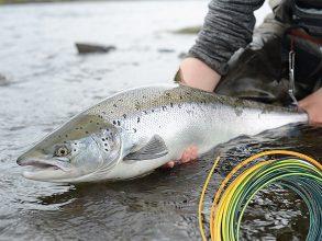 Fullspäckad Fiskelördag i Umeå