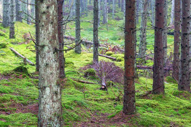 """DEBATT: """"Är det ren skogsförvaltning vi sysslar med?"""""""