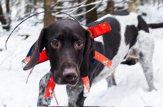 Hundförare – ta ansvar!