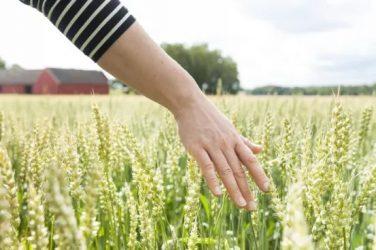 Det krävs för ökad tillväxt hos jordbruksföretagen