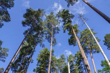 Så många skogsåtgärder planeras