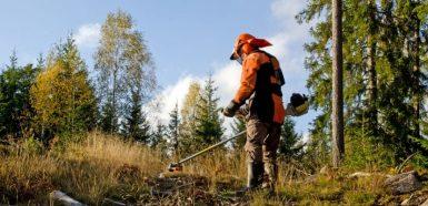 Arbetskraft fördelas om för att hjälpa skogsbruk och lantbruk