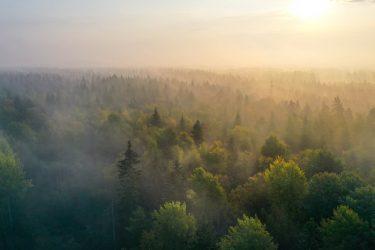 Het marknad för skogsfastigheter